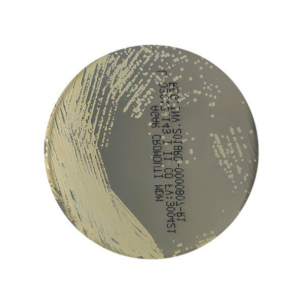 agar-cromo-uti-cromogenico-orina-levadura-candida