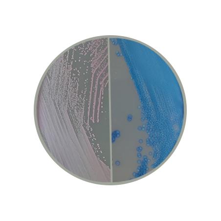 biplaca-cromogenico-cromo-strep-b-mdm-cientifica.